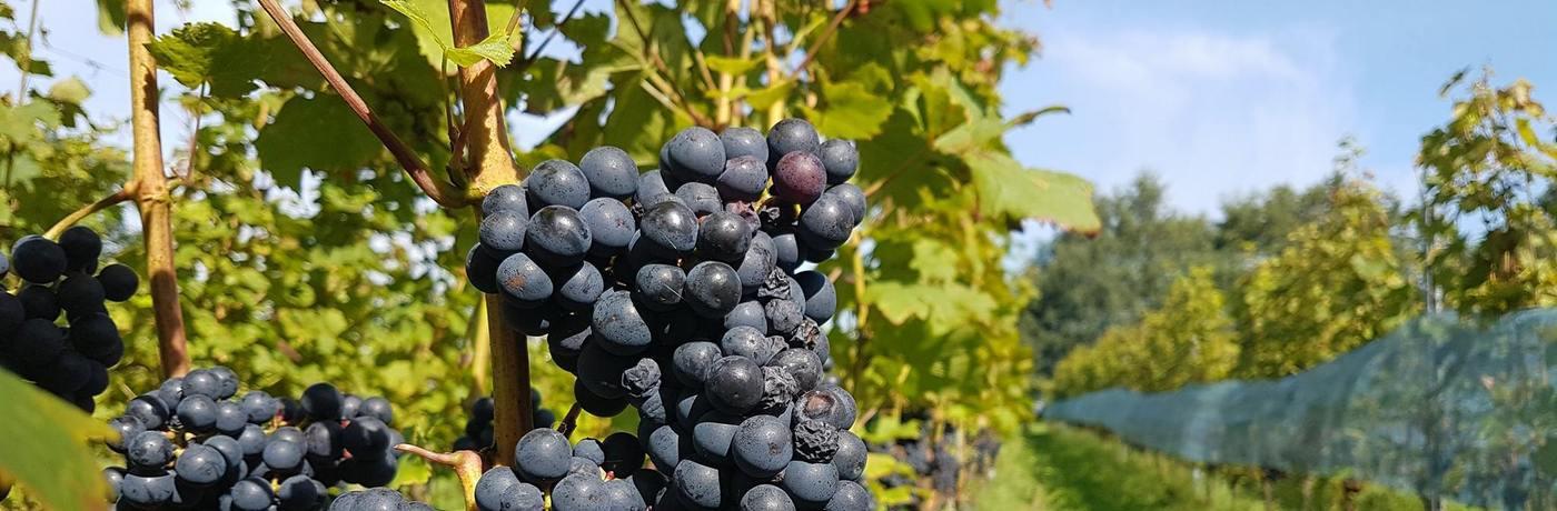 Weinprobe Holland Hesselink